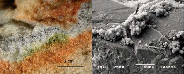 Sezione di cristalli di quarzo vista al microscopio elettronico, colonizzata dai microrganismi criptoendolitici e funghi Cryomyces.