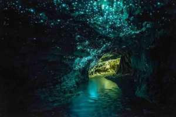 Glowworm Caves - New Zealand