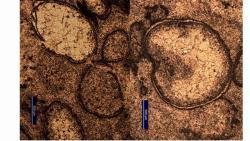 Sferule da impatto al microscopio